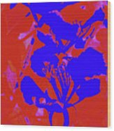 Poinciana Flower 4 Wood Print