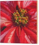 Poinsettia 845 Wood Print