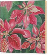 Poinsettia Magic Wood Print