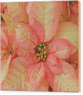 Poinsettia Passion Wood Print