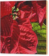 Poinsettias - Flaming Reds Wood Print