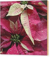 Poinsettias -  Painted And Speckled Wood Print