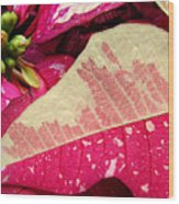 Poinsettias -  Painted And Speckled Up Close Wood Print
