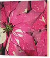 Poinsettias -  Red And White Speckled Wood Print
