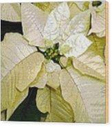 Poinsettias In White Wood Print