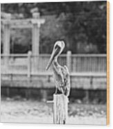 Point Clear Alabama Brown Pelican - Bw Wood Print