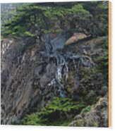 Point Lobos Veteran Cypress Tree Wood Print by Charlene Mitchell
