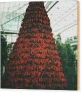 Pointsettia Tree Wood Print