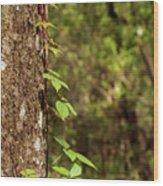Poison Ivy Climbing Oak Tree Trunk Wood Print