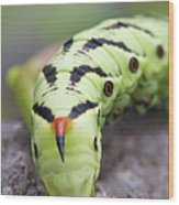 Pokemon In Real Caterpie Wood Print