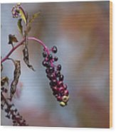 Pokeweed Berries 20121020_134 Wood Print