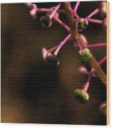 Pokeweed Emerges - Wc Wood Print