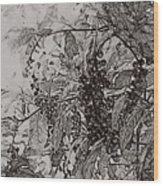 Pokeweed Wood Print