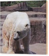 Polar Bear 2 Wood Print