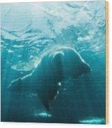 Polar Bear Swim Wood Print