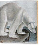 Polar Bear (ursus Maritimus) Wood Print