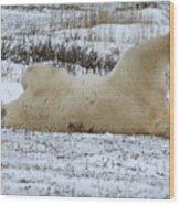 Polar Bear Yoga Wood Print