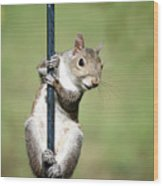 Pole Dancer 283 Wood Print