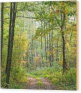 Polish Forest 2 Wood Print
