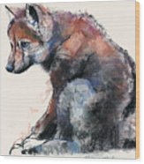 Polish Wolf Pup Wood Print