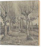 Pollard Birches Nuenen  March 1884 Vincent Van Gogh 1853  1890 Wood Print