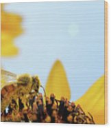 Pollen-coated Honey Bee On A Sunflower Wood Print