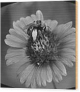 Pollen Collector Bw Wood Print