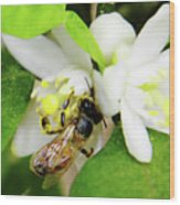 Pollen - Covered - Bee Wood Print