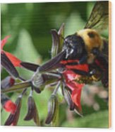 Pollen Covered Bee Wood Print