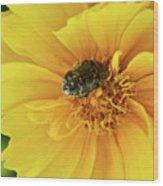 Pollen Feeding Beetle Wood Print