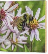 Pollen Gathering Wood Print