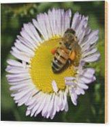 Pollen Harvest Wood Print