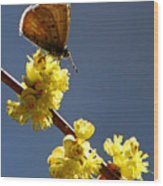 Pollen Pickup Wood Print