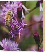 Pollen Powdered Bee Wood Print