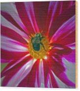 Pollenator Wood Print