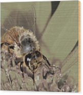 Pollinating Bee Wood Print