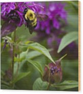 Pollinating Bumble Bee Wood Print