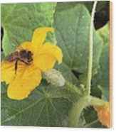 Pollinating Cucumbers 2  Wood Print by Daniele Smith