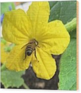 Pollinating Cucumber 1 Wood Print