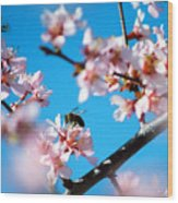 Pollination 1.11 Wood Print