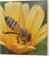 Pollination 2 Wood Print