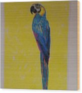 Polly The Parrot Wood Print
