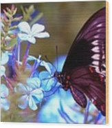Polydamas Swallowtail Butterfly Wood Print