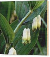 Polygonatum Odoratum Wood Print