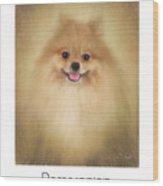 Pomeranian Poster Wood Print