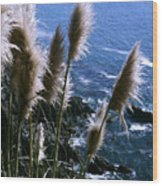 Pompas Grass2 Wood Print