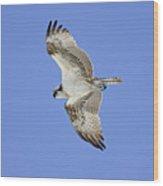 Ponce Osprey 1 Wood Print