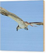Ponce Osprey 3 Wood Print