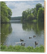 Pond And Ducks Wood Print