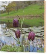 Pond Dwellers Wood Print